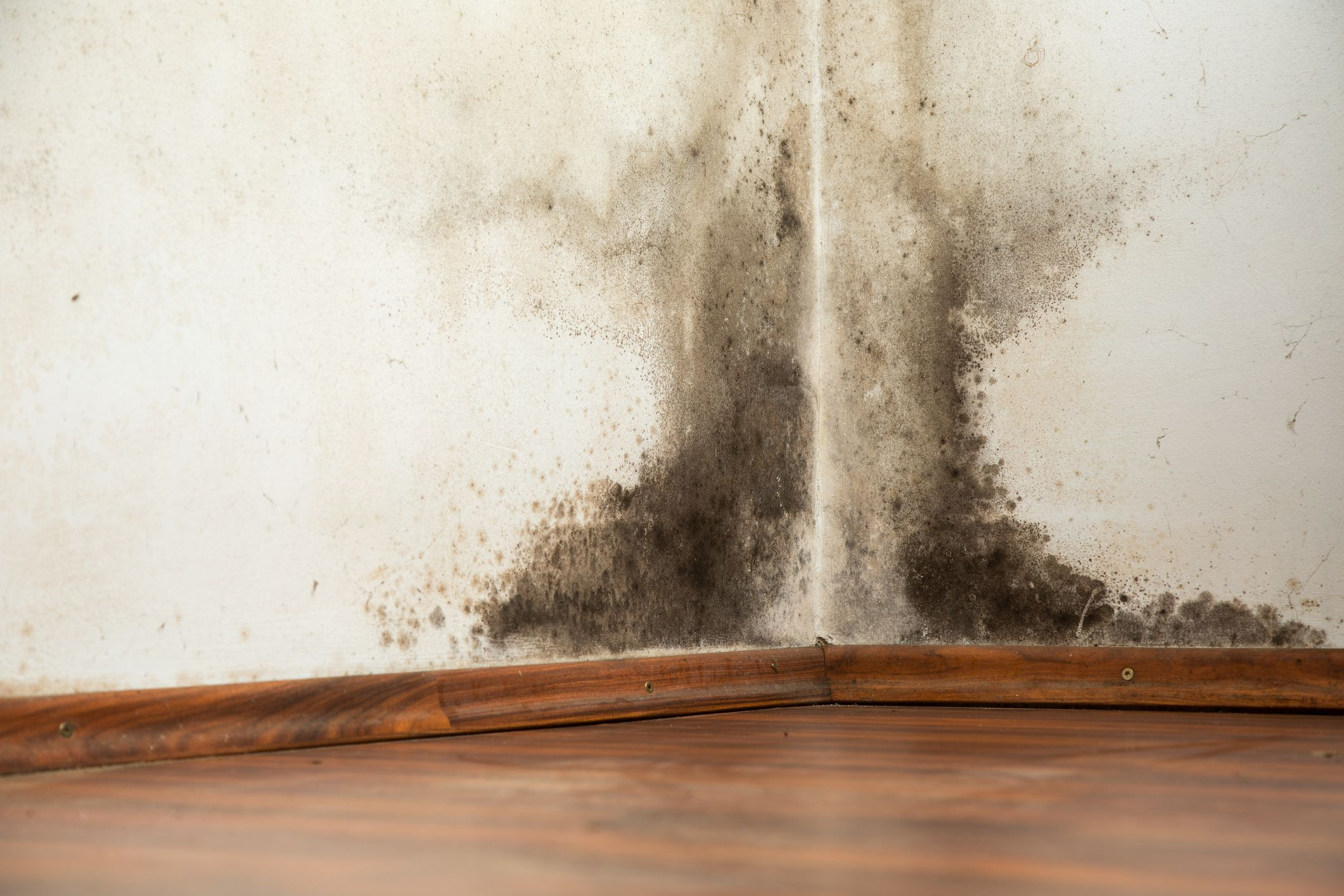 The Best Way To Get Rid Of Mold On Walls